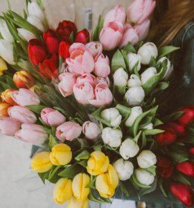 Es wird Frühling - Tulpen