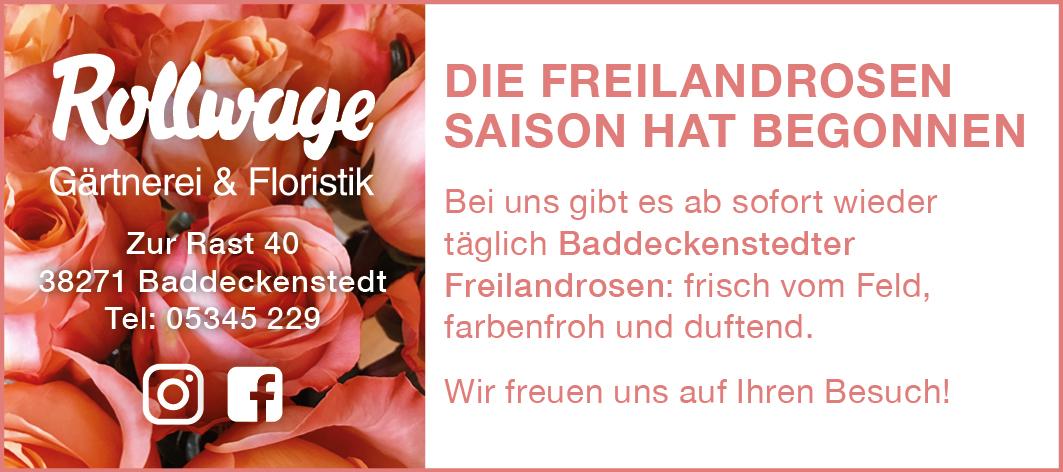 Freilandrosen Saison